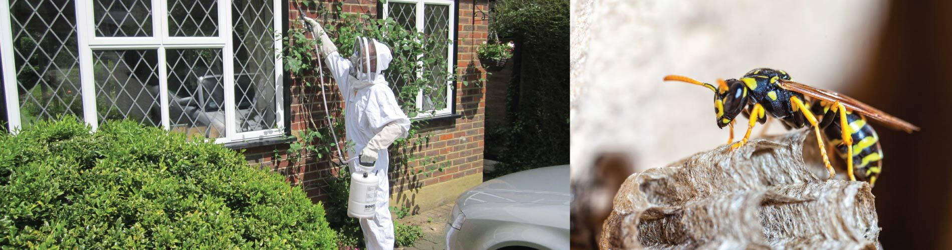 wasp removal windsor